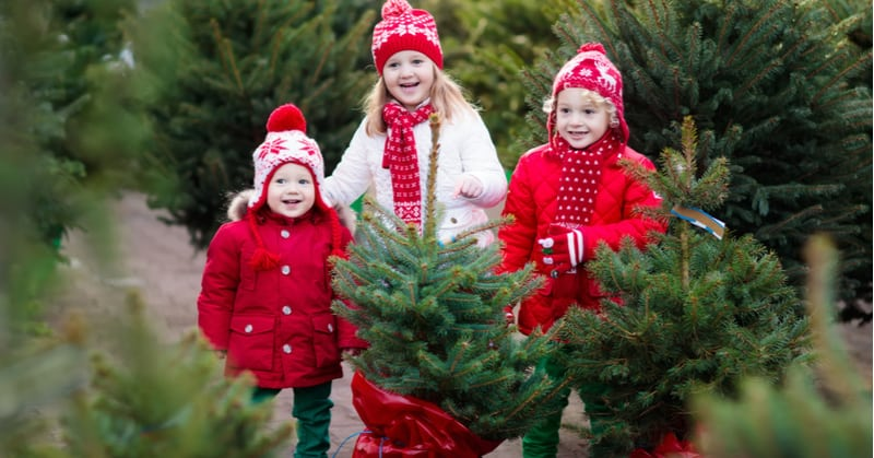 How to plant a real christmas tree