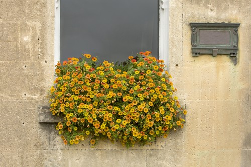 nasturtiums which do well in hanging baskets and come in trailing or climbing varieties. Nasturtiums are low maintenance and do well in sun or partial shade.