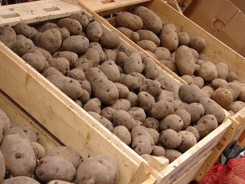 Buy seed potatoes early for the best pick