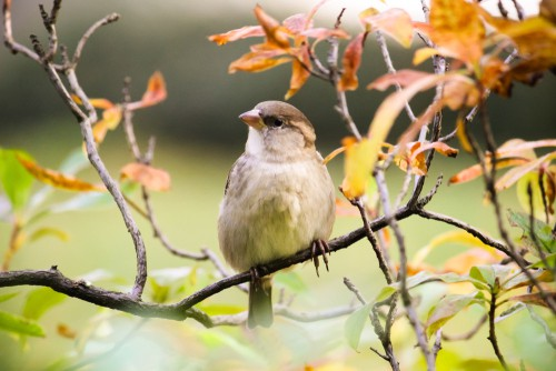 Plant shrubs and trees to provide cover for birds to attract them into your garden