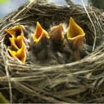 One of the easiest ways to encourage birds into your garden is by planting shrubs. In this article, we look at 8 of the best shrubs for nesting birds.