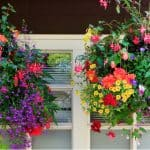 Top 10 best plants for hanging baskets