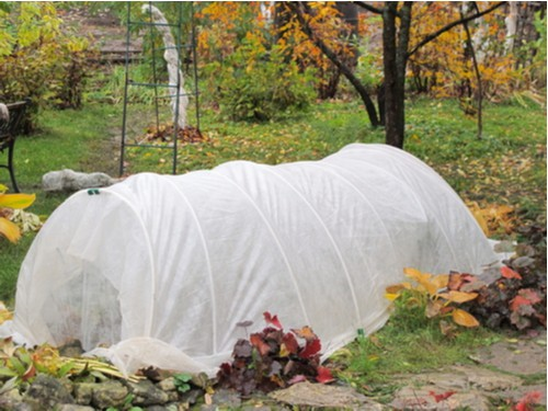 Use a miniature tunnel or straw to protect plants in winter