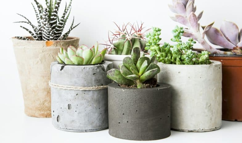 How to grow succulents in pots and containers