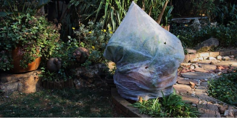 How to prepare and protect tender plants in winter