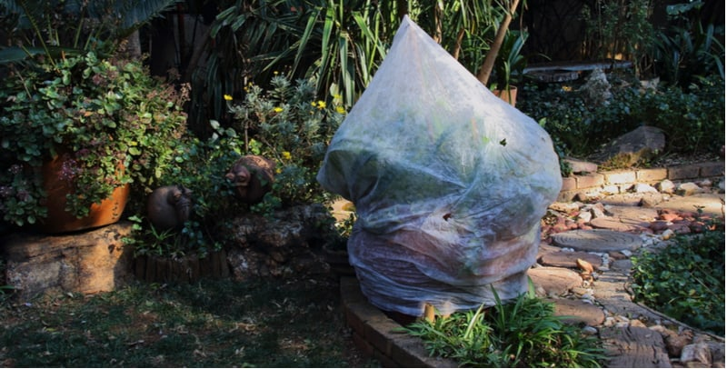 How to protect plants from frost. Winter can be a time when many gardeners lose plants to serve frost but this doesn't have to be the case. We look at protecting plants from frost.