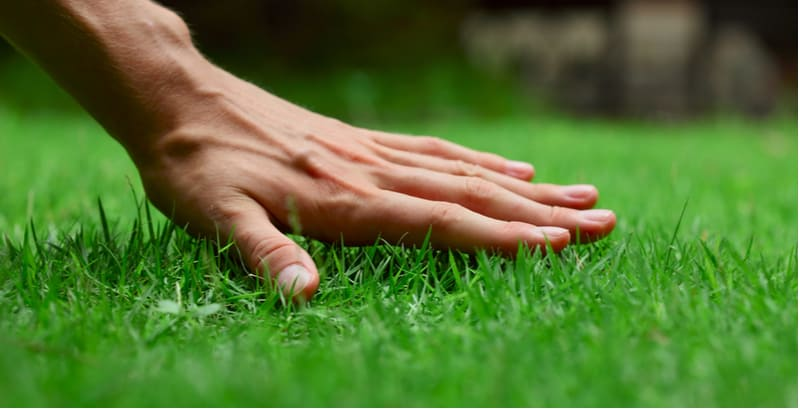 Lawn Care Tips. Looking after your lawn doesn't have to be complicated. Follow our top 10 lawn care tips for a green lawn. From aerating to feeding to removing moss.