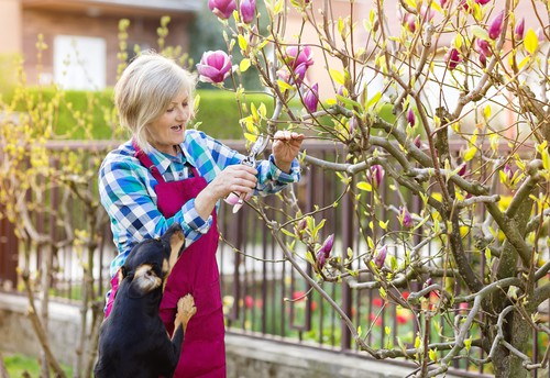 How to Prune Magnolias