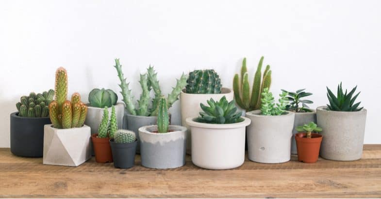 Overwintering succulents – the beginners guide to keep them looking amazing