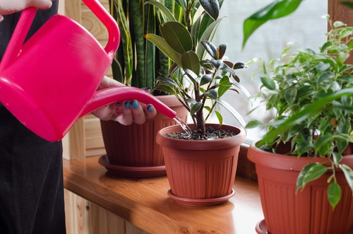 water plants in the morning or evening where possible and remember plants grown in container need watering more often
