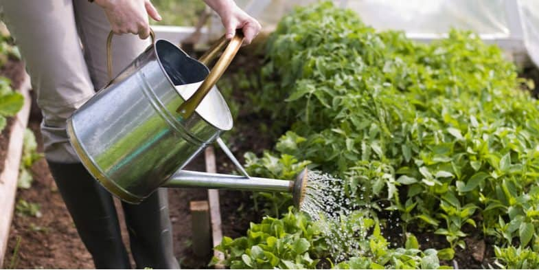 When to water plants – Top tips for watering more efficiently