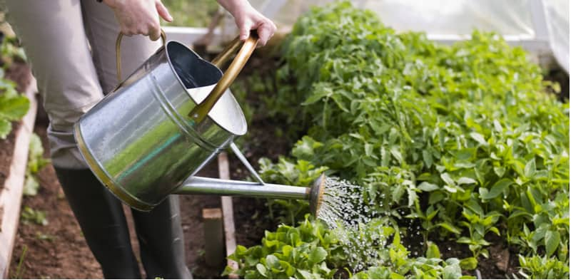 When and how to water plants - In this guide on when to water plants we look at the best water practices and how to water more efficiently including watering morning and evening plus more tips