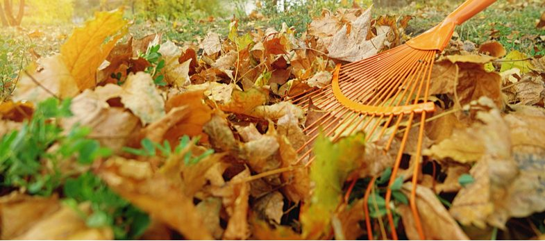Winter lawn care – Tops tips for winter lawn maintenance