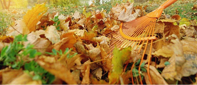 Winter lawn care starts with scarifying and aerating the lawn before winter sets in. After this keep the lawn clear from leaves and avoid walking on the lawn.