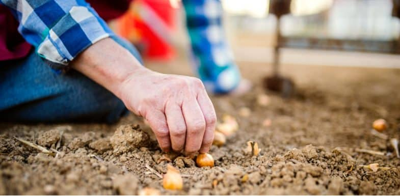 10+ Vegetables to plant in winter (Autumn ideally)