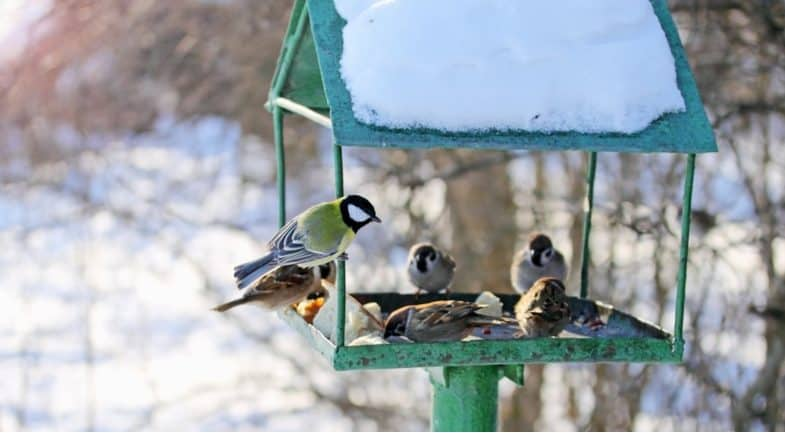 Choosing the best food for garden birds in winter and helpful tips to help over the colder months on the year