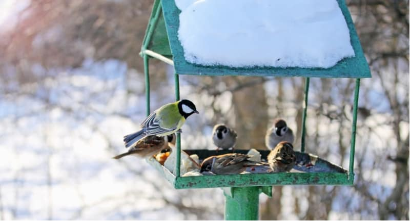 In winter local birds need our help more than ever, we have made a list of the best food for garden birds in winter. We also include handy tips to do your part