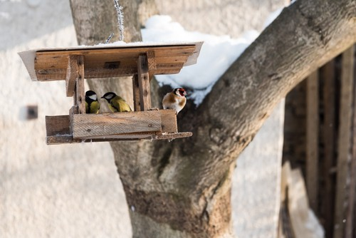 Birds in winter eating from bird table.jpg