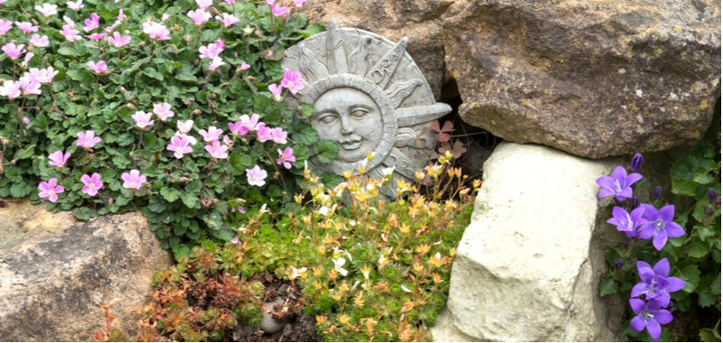 Growing and caring for alpine rockery plants
