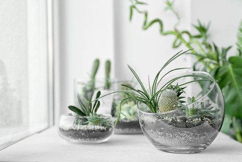 Temperature-and-Humidity-Requirements-for-succulents