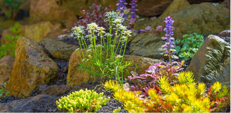 Rockeries can make a stunning feature. We look at 10 of the best alpine rockery plants for planting a rockery so you can make a display to be proud of.