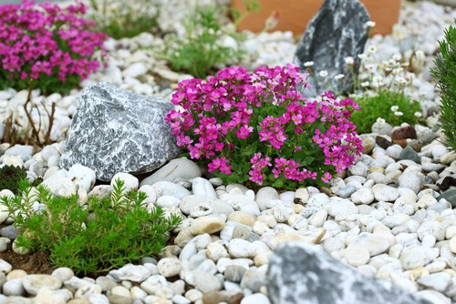 Dividing rockery plants and planting into rockeries