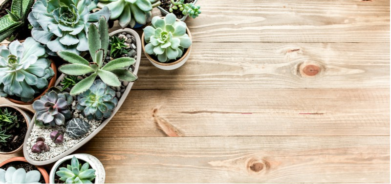 With thousands of succulents, it can be difficult to find suitable types to grow so we have listed 20 of our favourite types of succulents with pictures.
