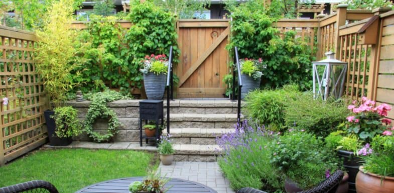 Best plants for a small urban garden