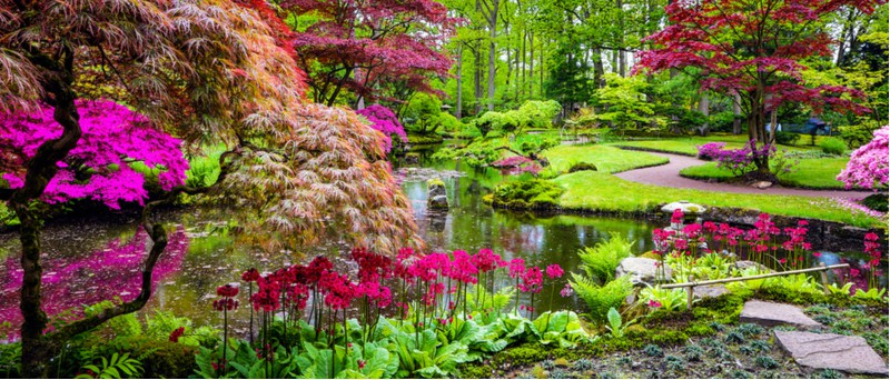 Making a Japanese garden? you need some authentic plants, here are some of the best plants for creating a Japanese garden even in the smallest of spaces.