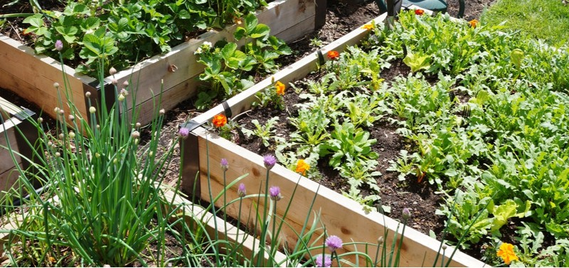 Raised beds are a great way of growing plants and in this article, we look at some of the best plants for raised beds including fruit and veg.
