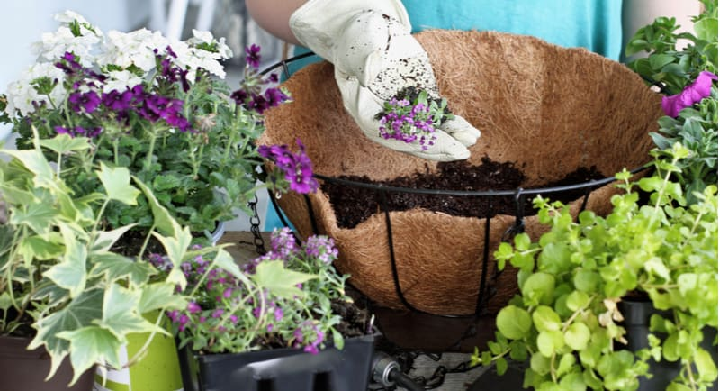 One question we get asked often is, How many plants do you put in a hanging basket? - if your planting using 9cm pot plants, start with 3-5 plants.