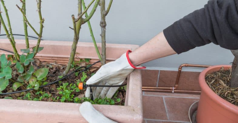 How to keep plants watered while on holiday