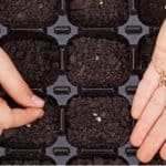 If you want to germinate seedling it starts with using good quality seed compost. in this step guide, we explain how to make seed compost for starting seedling