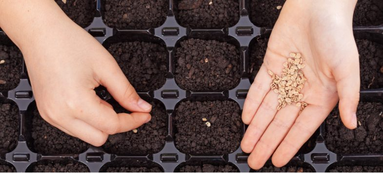 How to make seed compost for starting seedling