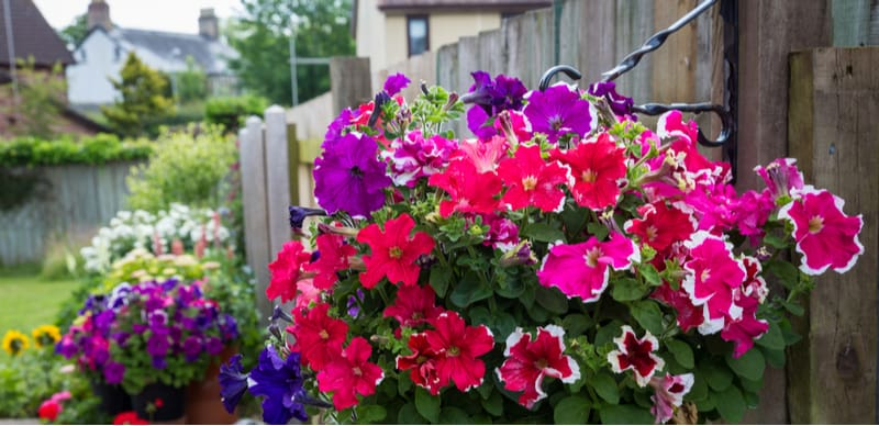 How to secure hanging baskets securely