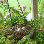 How to keep birds out of hanging baskets