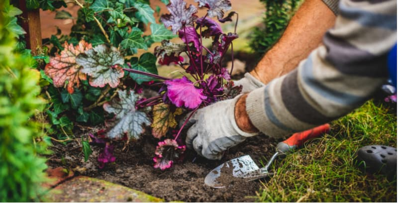 Easy to follow guide on how to propagate heuchera by division, by taking cutting and sowing seed. Learn more about propagating coral bells now step by step