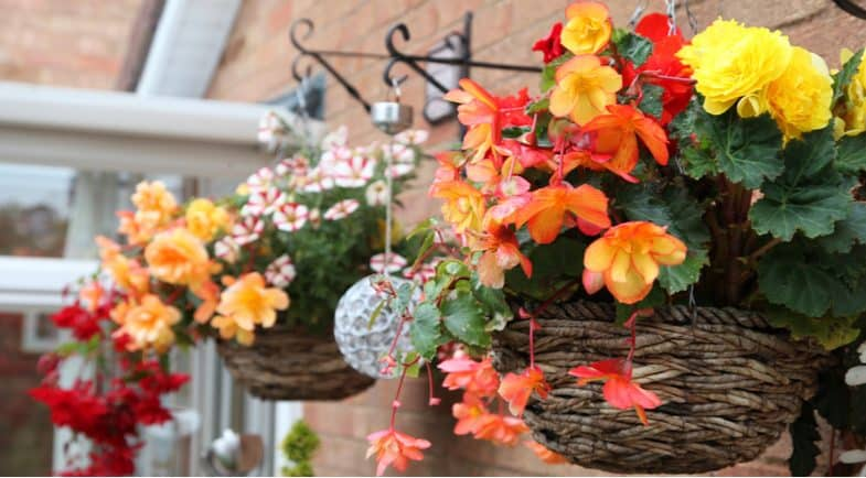 How to stop hanging baskets drying out to keep them flowering for longer