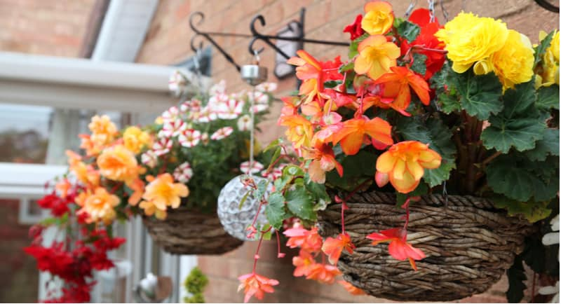 How to stop hanging baskets drying out