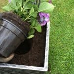When to use ericaceous compost on hydrangeas