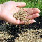 With so many types of grass seed, it can be difficult to choose the right one. Read our buyers guide and see our top 8 picks of the best grass seed. Read reviews