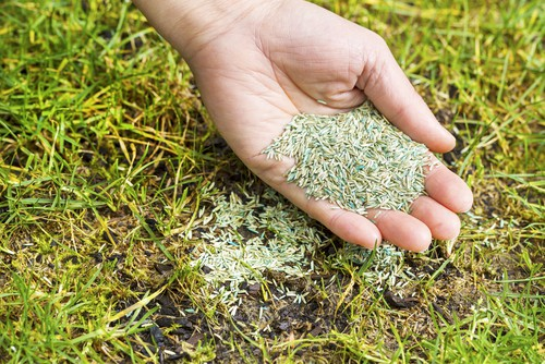 Choosing the right grass seed mix