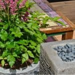 Growing astilbe in pots and containers