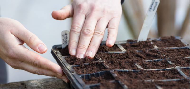 In this guide, we go over step by step how to grow perennials from seed from sowing seed in seed traps to providing heat, choosing compost and repotting.