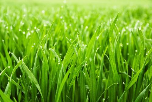 Grass seed types