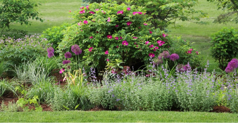 Most sites provide a mix of sun and shade with either morning or afternoon sun but what if you have a position that gets sun all day. See 10 shrubs for full sun.