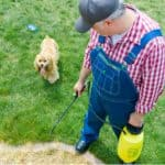 Many weedkillers are very dangerous around pets but there are some which are safe for pets once the area has dried, you can also make your own which we reveal.