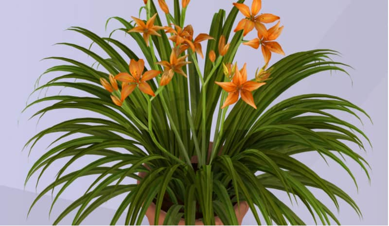 Daylilies are stunning plants which can thrive when growing Daylilies in pots. They like moist compost which is free-draining such as John Innes compost.