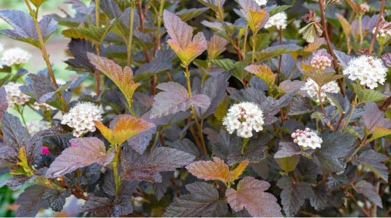 Top 10 low maintenance shrubs that require minimal care