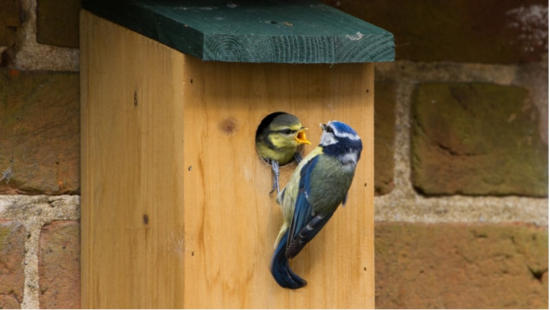 Get a unique look into the lives of our feathered friends in your garden with the best bird box cameras. We compare 5 complete setups with everything you need to get started.